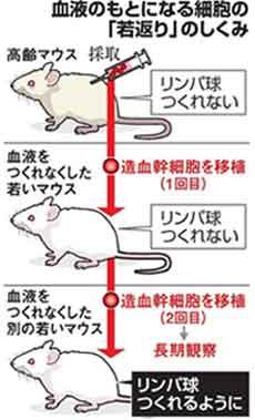 『米スタンフォードチームがマウスの皮膚の若返り成功』/ AFP_b0003330_21563617.jpg