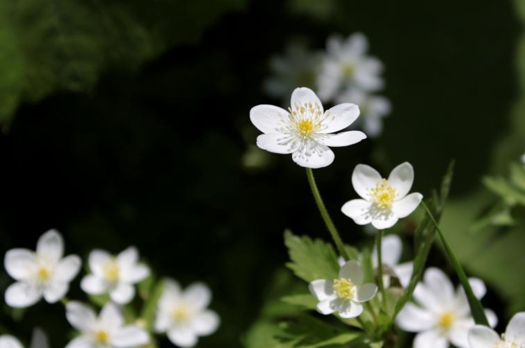 春・行ったり来たり 4月16日_f0113639_13335075.jpg