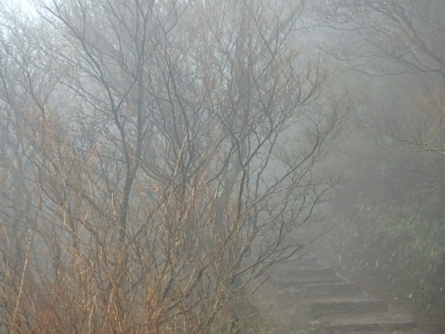 小雨 霧の六甲 おじさんの休日_f0334143_7265432.jpg