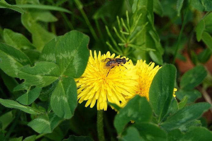 江戸川で出会った昆虫たち_d0149245_22163957.jpg