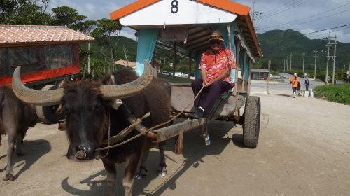 由布島観光 水牛車で海を渡る_c0011649_05115861.jpg