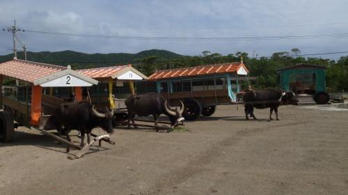 由布島観光 水牛車で海を渡る_c0011649_05122548.jpg