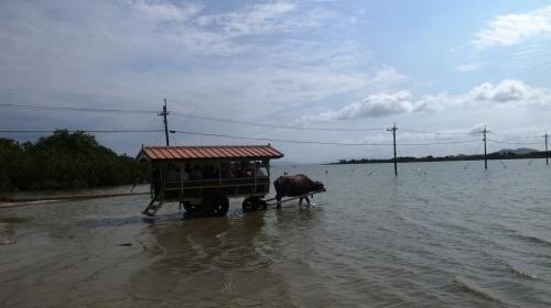由布島観光 水牛車で海を渡る_c0011649_05125088.jpg