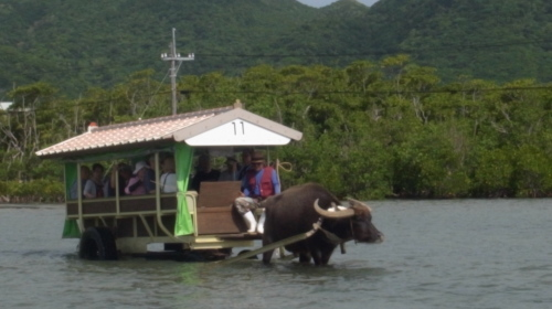 由布島観光 水牛車で海を渡る_c0011649_05133489.jpg