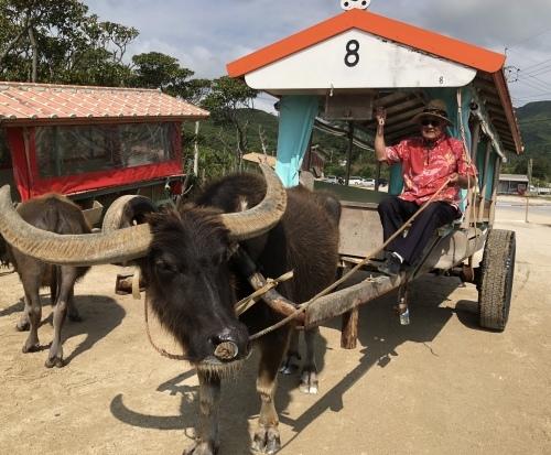 由布島観光 水牛車で海を渡る_c0011649_05142283.jpg