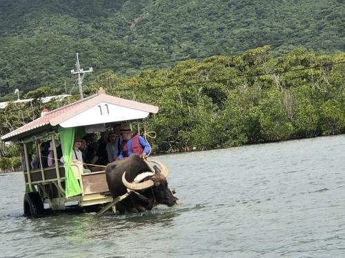 由布島観光 水牛車で海を渡る_c0011649_05152880.jpg
