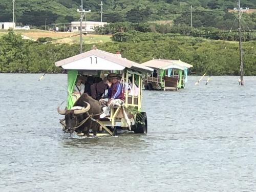 由布島観光 水牛車で海を渡る_c0011649_05161726.jpg