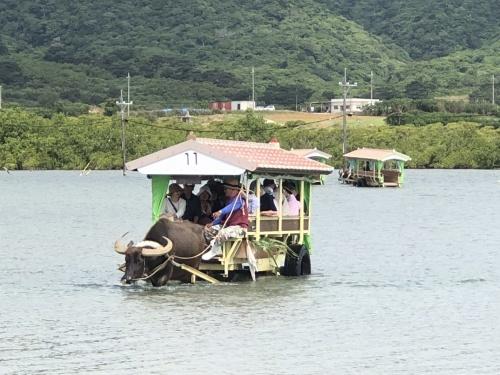 由布島観光 水牛車で海を渡る_c0011649_05163960.jpg