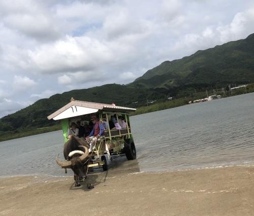 由布島観光 水牛車で海を渡る_c0011649_05170064.jpg