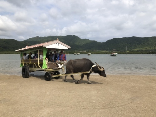 由布島観光 水牛車で海を渡る_c0011649_05173817.jpg
