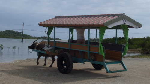 由布島観光 水牛車で海を渡る_c0011649_05185797.jpg
