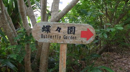 由布島観光  蝶々園と亜熱帯植物園_c0011649_23000292.jpg