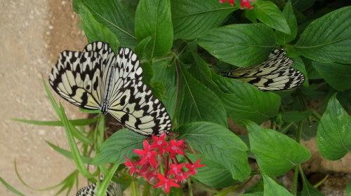 由布島観光  蝶々園と亜熱帯植物園_c0011649_23010861.jpg