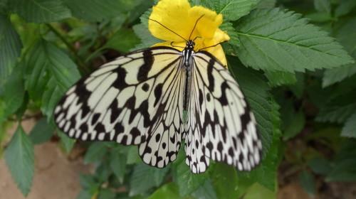 由布島観光  蝶々園と亜熱帯植物園_c0011649_23015541.jpg