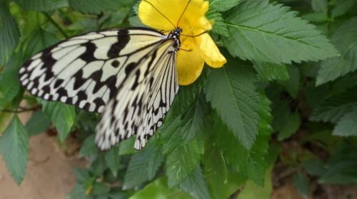 由布島観光  蝶々園と亜熱帯植物園_c0011649_23021450.jpg