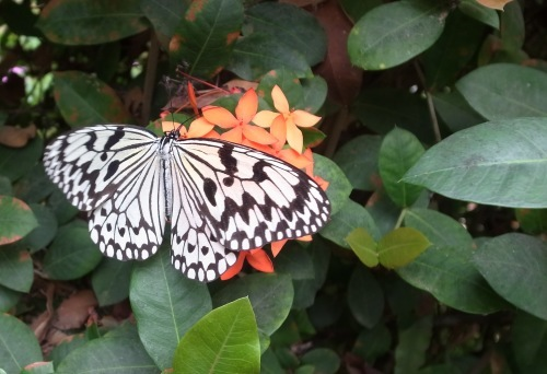 由布島観光  蝶々園と亜熱帯植物園_c0011649_23023427.jpg