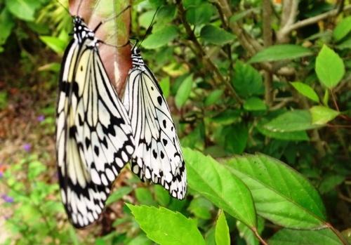 由布島観光  蝶々園と亜熱帯植物園_c0011649_23030780.jpg