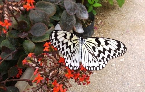 由布島観光  蝶々園と亜熱帯植物園_c0011649_23032808.jpg