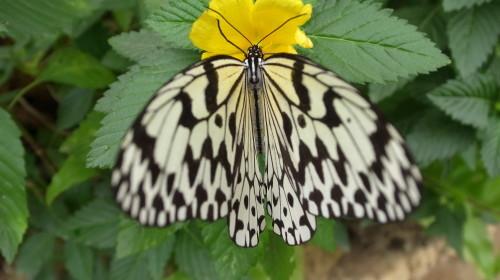 由布島観光  蝶々園と亜熱帯植物園_c0011649_23053218.jpg