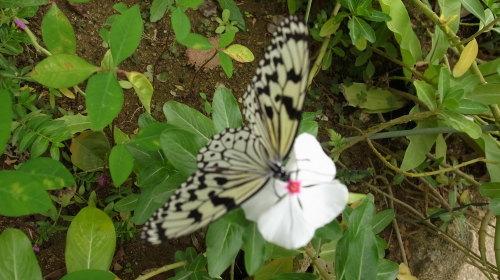 由布島観光  蝶々園と亜熱帯植物園_c0011649_23055035.jpg