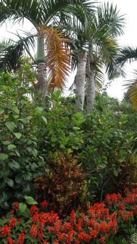 由布島観光  蝶々園と亜熱帯植物園_c0011649_23072005.jpg