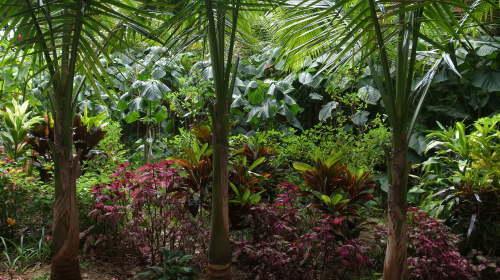 由布島観光  蝶々園と亜熱帯植物園_c0011649_23074045.jpg
