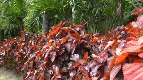 由布島観光  蝶々園と亜熱帯植物園_c0011649_23075413.jpg