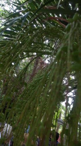 由布島観光  蝶々園と亜熱帯植物園_c0011649_23091511.jpg