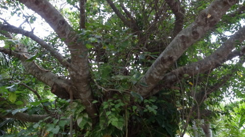 由布島観光  蝶々園と亜熱帯植物園_c0011649_23094022.jpg