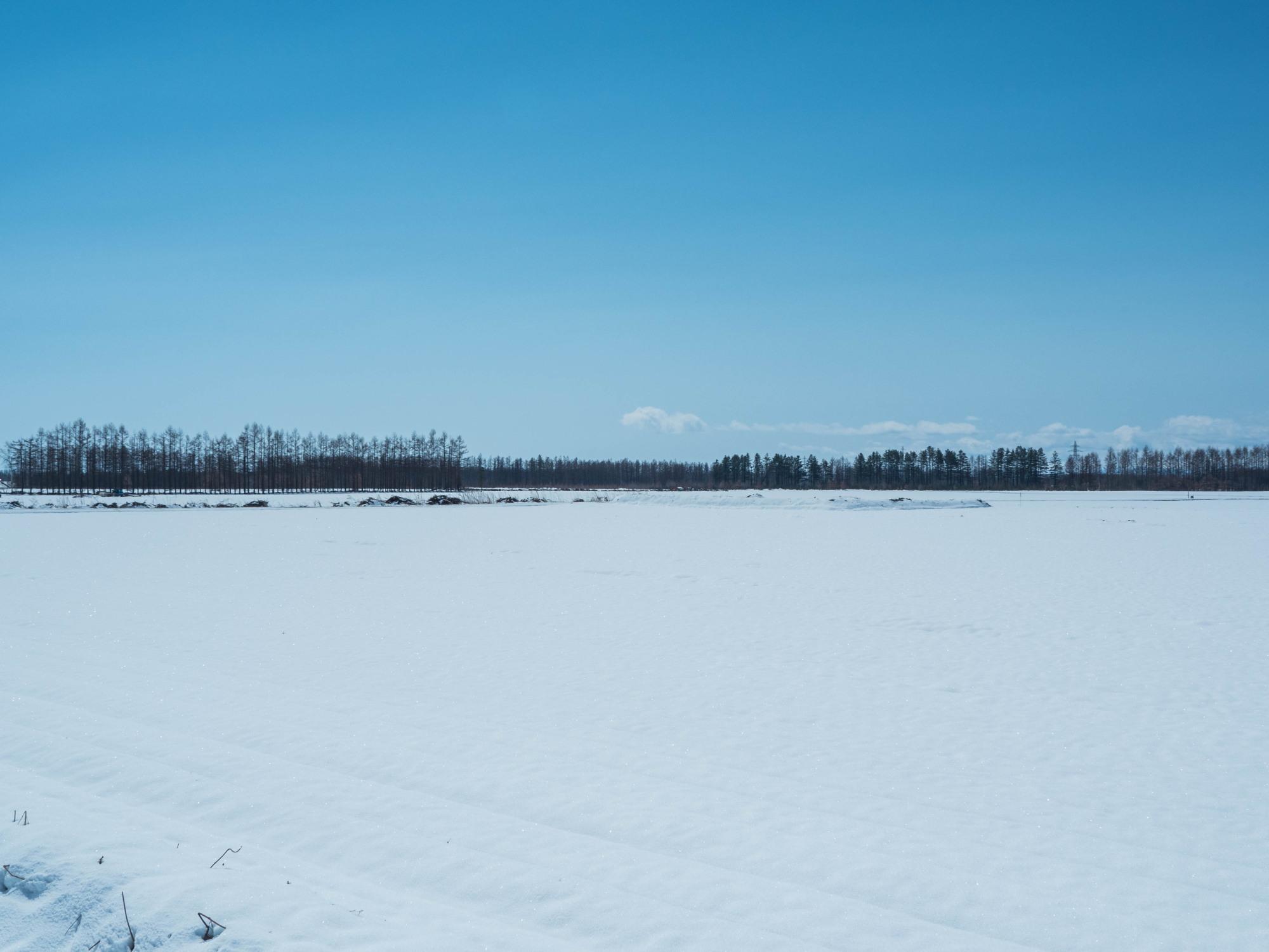 4月中旬ですが・・2夜連続積雪で畑はすっかり雪景色。_f0276498_22410771.jpg