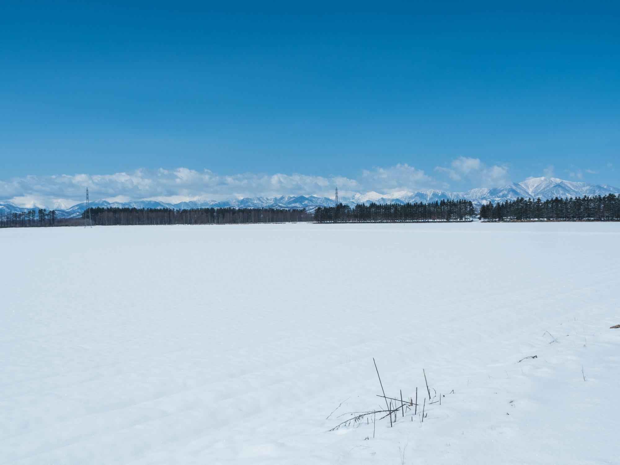 4月中旬ですが・・2夜連続積雪で畑はすっかり雪景色。_f0276498_22414570.jpg