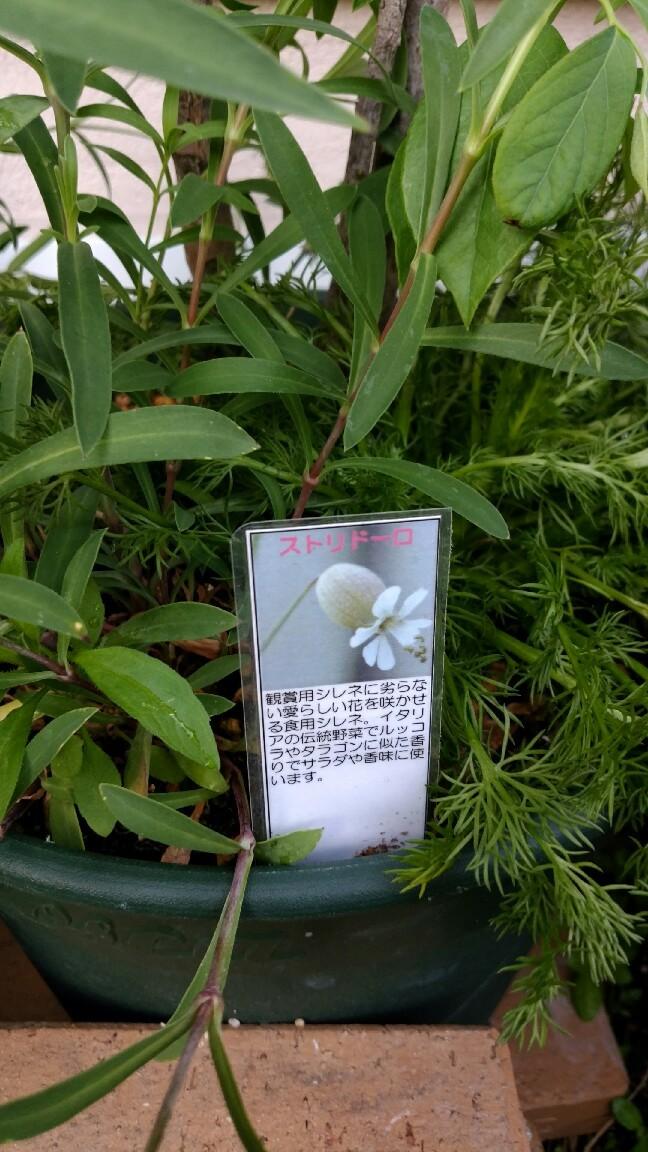 最近咲いた花_f0035506_10473444.jpg