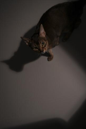 [猫的]夜の猫_e0090124_22231822.jpg