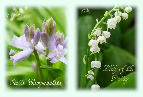 春の花_f0292335_12033258.jpg