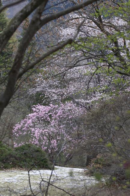 山の春を楽しむ_c0217255_06445385.jpg