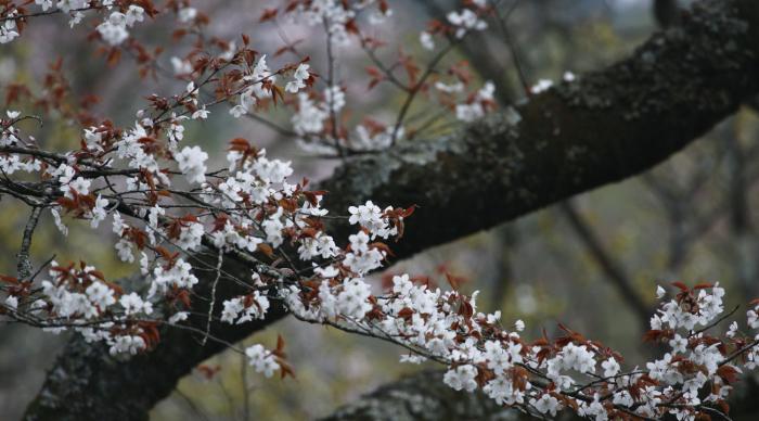 山の春を楽しむ_c0217255_06450053.jpg