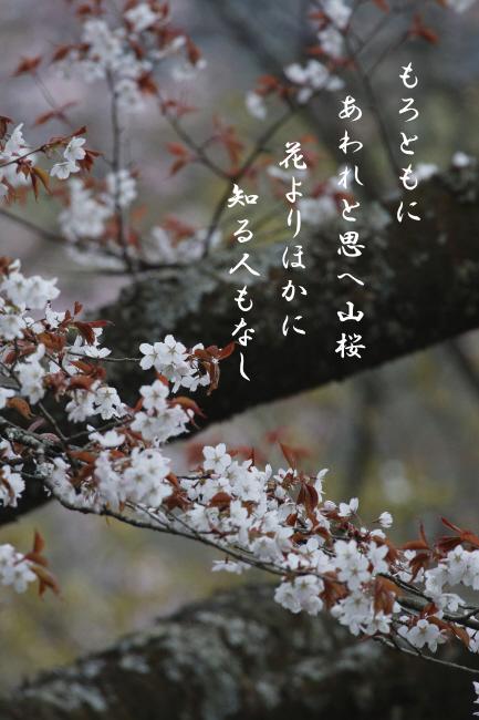 山の春を楽しむ_c0217255_06450783.jpg