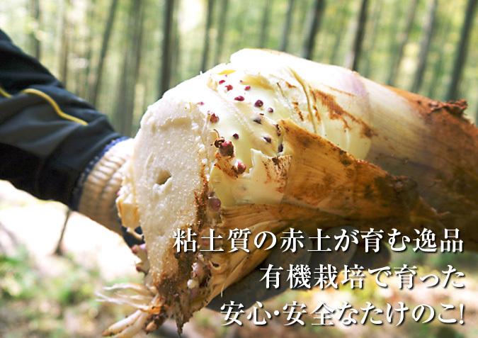 幻の白い「長生たけのこ」 平成30年度も残りわずか!お急ぎください!&収穫の様子の番外編_a0254656_17054336.jpg
