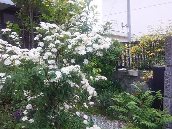 庭もすっかり春めいて_d0116059_21433406.jpg