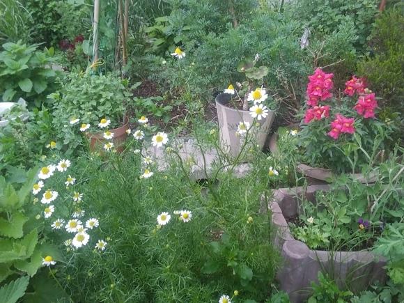 庭もすっかり春めいて_d0116059_21493848.jpg