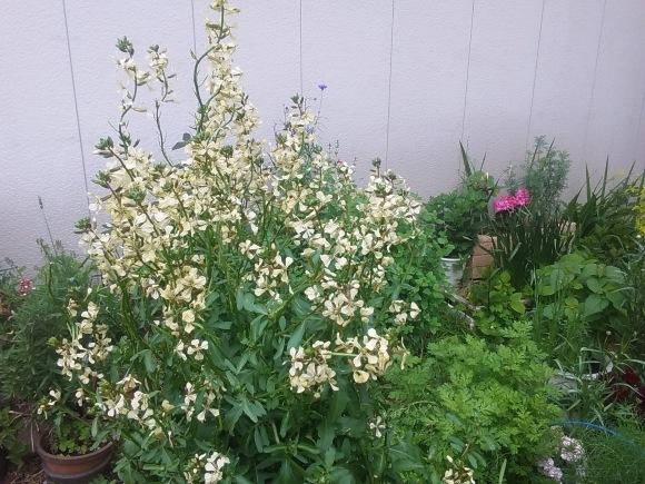 庭もすっかり春めいて_d0116059_21524788.jpg