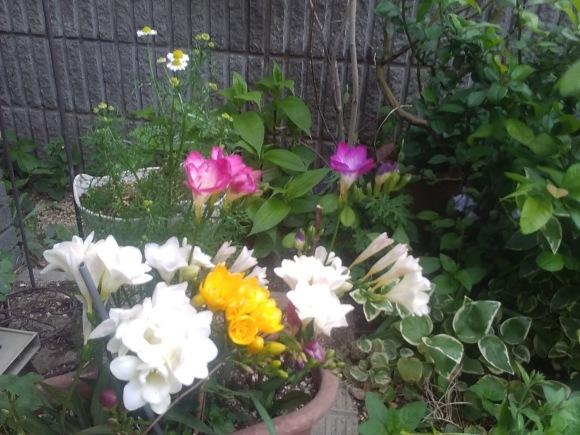 庭もすっかり春めいて_d0116059_21544979.jpg