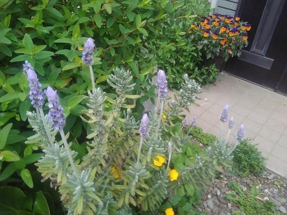 庭もすっかり春めいて_d0116059_21570184.jpg