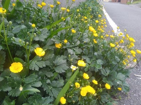 庭もすっかり春めいて_d0116059_22014202.jpg