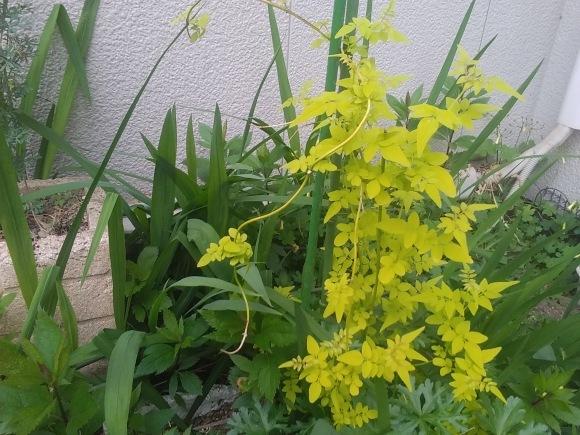 庭もすっかり春めいて_d0116059_22055572.jpg