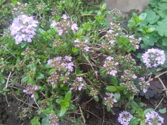 庭もすっかり春めいて_d0116059_22095220.jpg