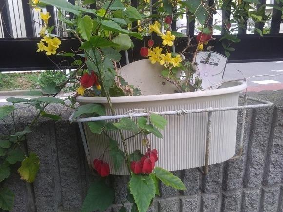 庭もすっかり春めいて_d0116059_22120258.jpg