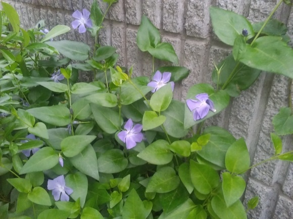 庭もすっかり春めいて_d0116059_22133328.jpg