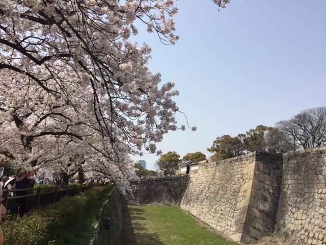 大阪城公園は桜満開!               大阪_e0184067_15225779.jpg