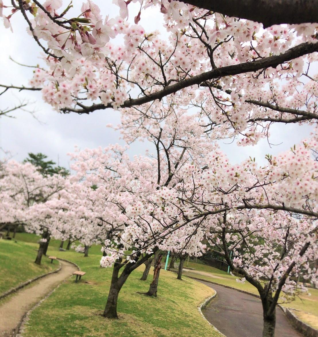 桜_e0383176_18091544.jpg